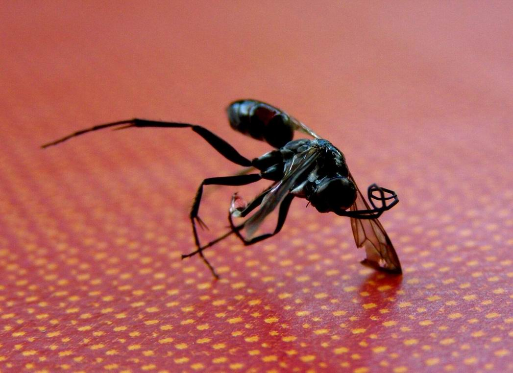 insekten im westerwald. Black Bedroom Furniture Sets. Home Design Ideas